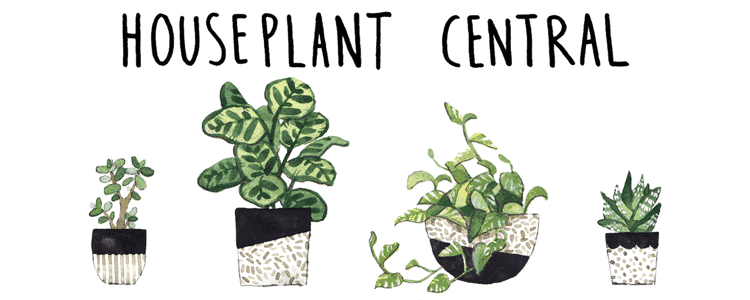 Houseplant Central