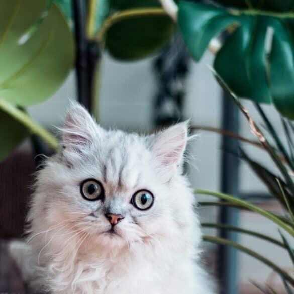 Cat surrounded by houseplants including Monstera deliciosa | Is Monstera toxic to cats and dogs?